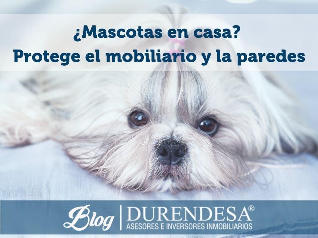 decorar una casa cuando tienes mascotas- viviendas Baleares